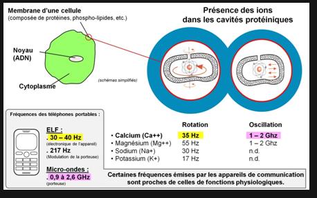 Présence des ions dans les cavités protéiniques